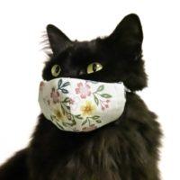 自家製布マスクをしたネコ